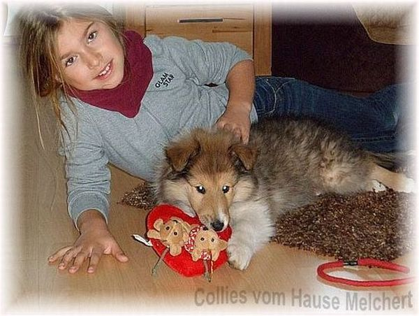 colliefreunde