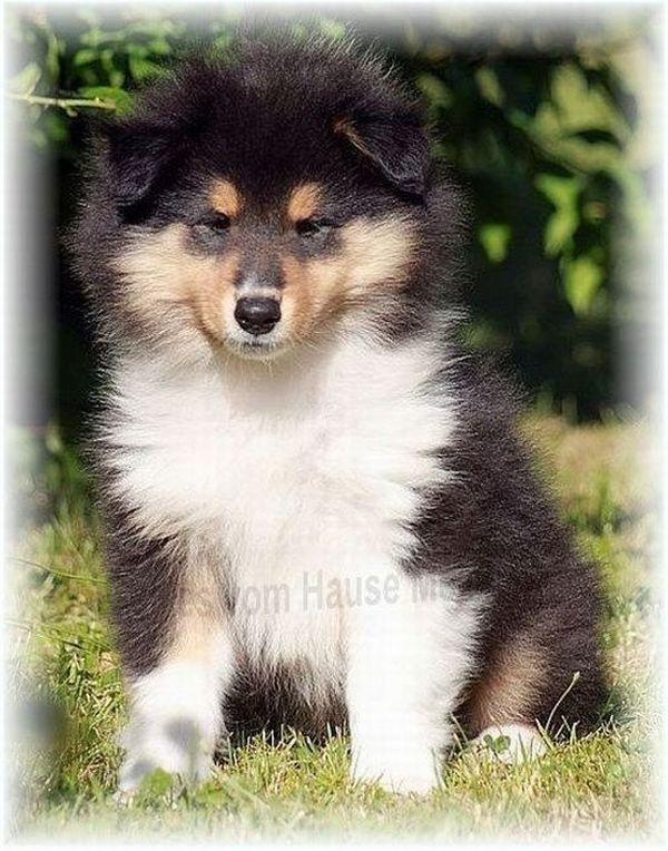 Warum Ein Collie Aus Menslage In Der Neuverfilmung Lassie Spielt